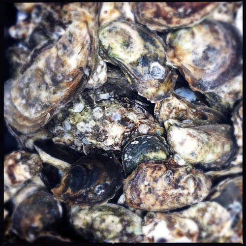 Blue Point oysters at Odette 2