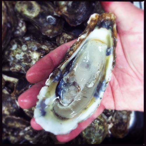 Blue Point oysters at Odette 1