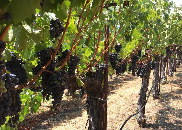 Robert Sinskey Vineyards SLD Cabernet Stags Leap District
