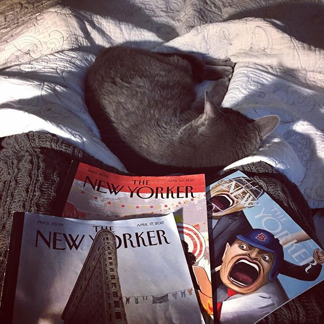 "Gettin' caught up on this stormy Sunday. Great article about Pauline ""Pauli"" Murray in the April 17 issue. #heroine #badasslady #newyorkerinthewild #sunday #neworleans #catsofinstagram"
