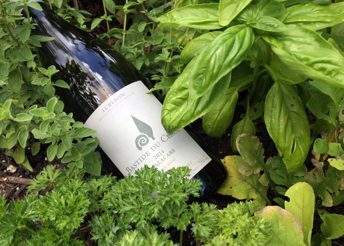 The remains of a very delicious Luberon red wine from Bastide du Claux reclining in the late-May herb garden.