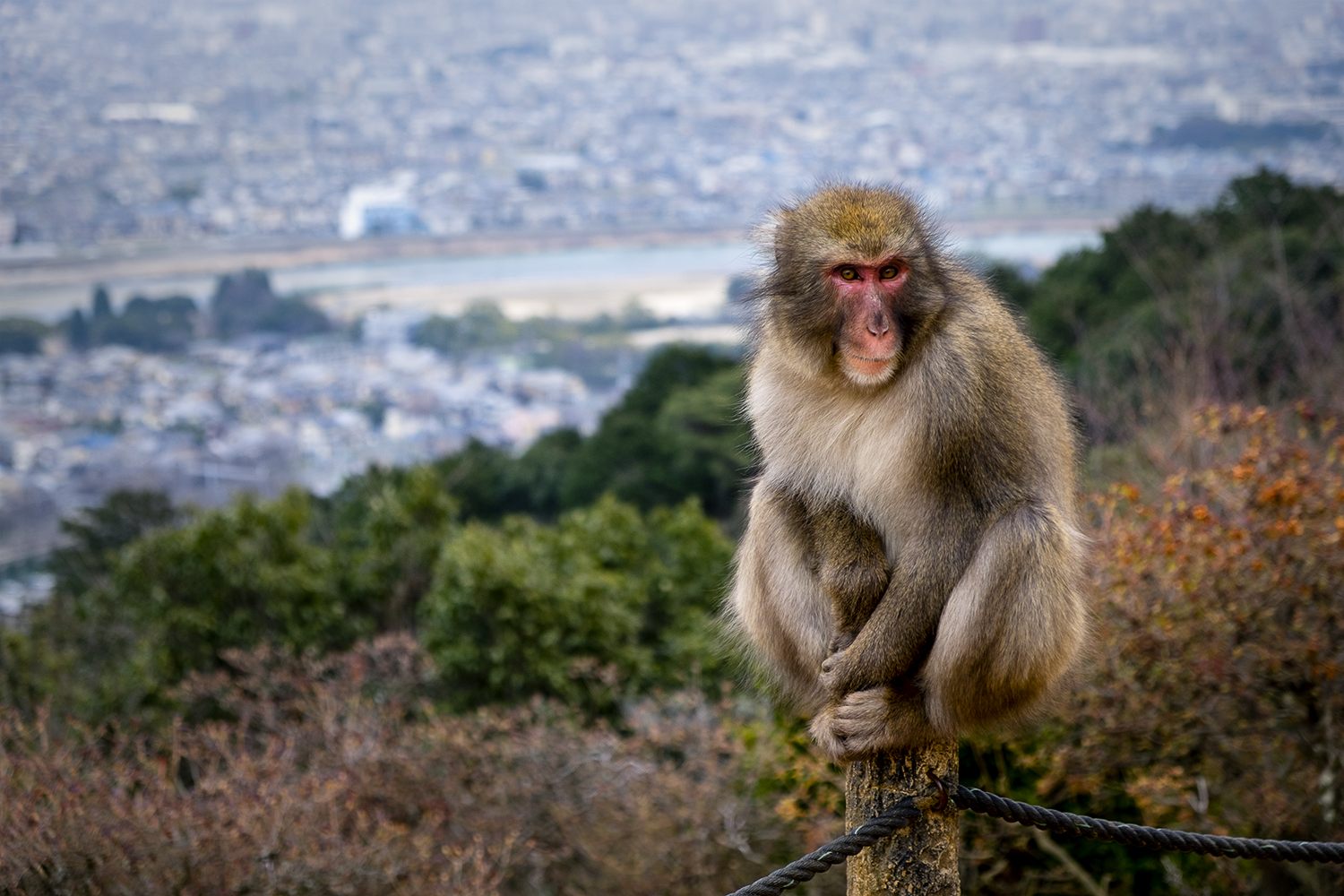 One of the monkeys posing for a quick photo.