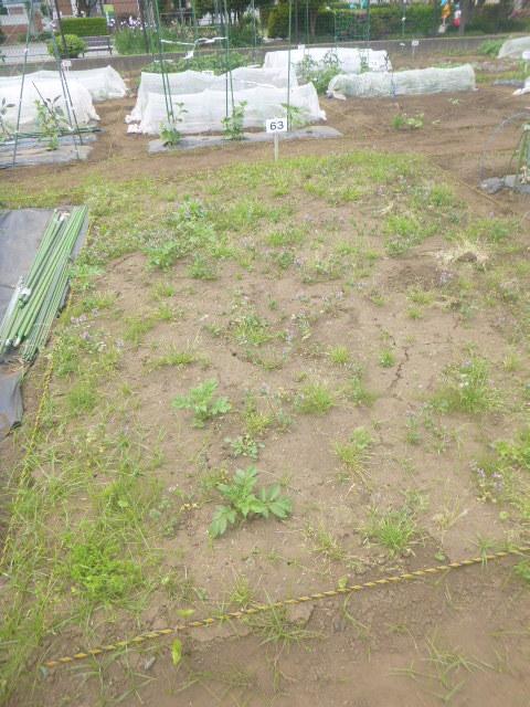 BKI-Preschool:farm1-first-time.jpeg