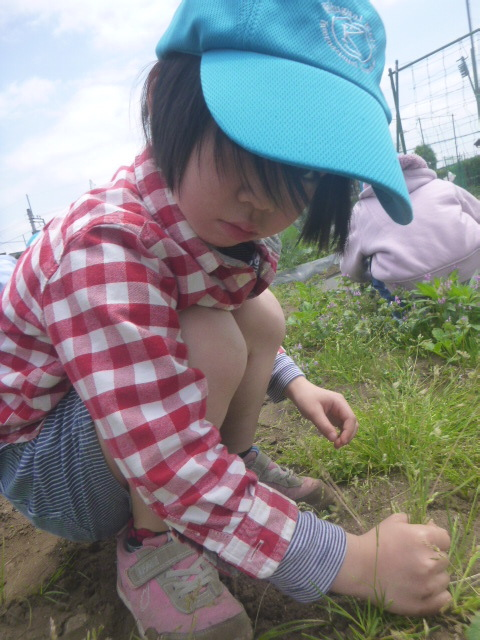 BKI-Preschool:farm1-pull-weeds-grip.jpeg