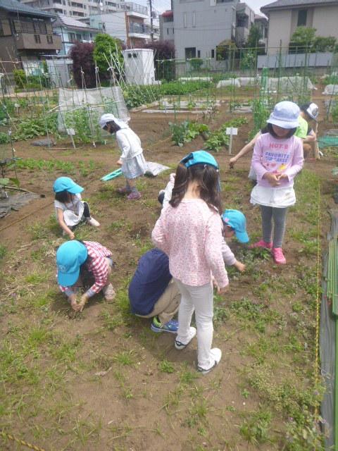BKI-Preschool:farm1-pull-weeds-together.jpeg