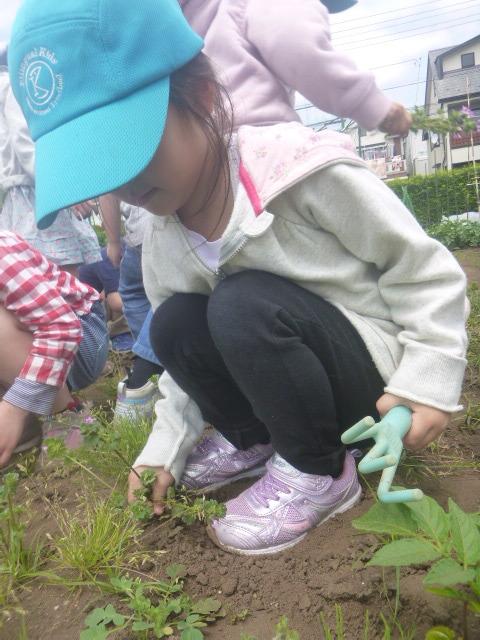 BKI-Preschool:farm1-pull-weeds.jpeg
