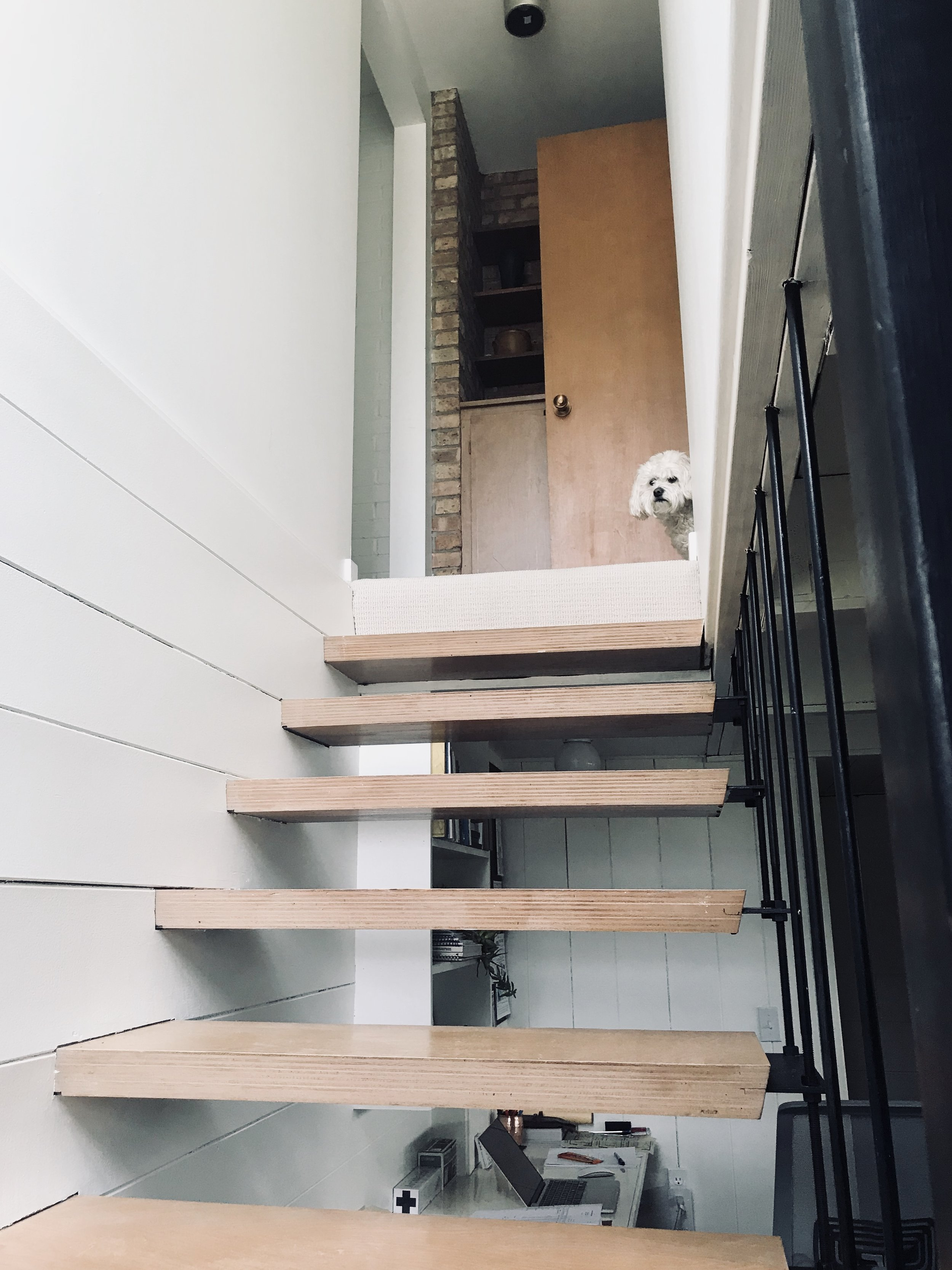 2360 7th Street Floating Stairway with Doggie.jpg