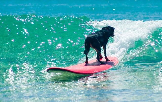 3 Well Travelled Bride Black Dog Surfing Wedding Honeymoon Byron Bay.jpg
