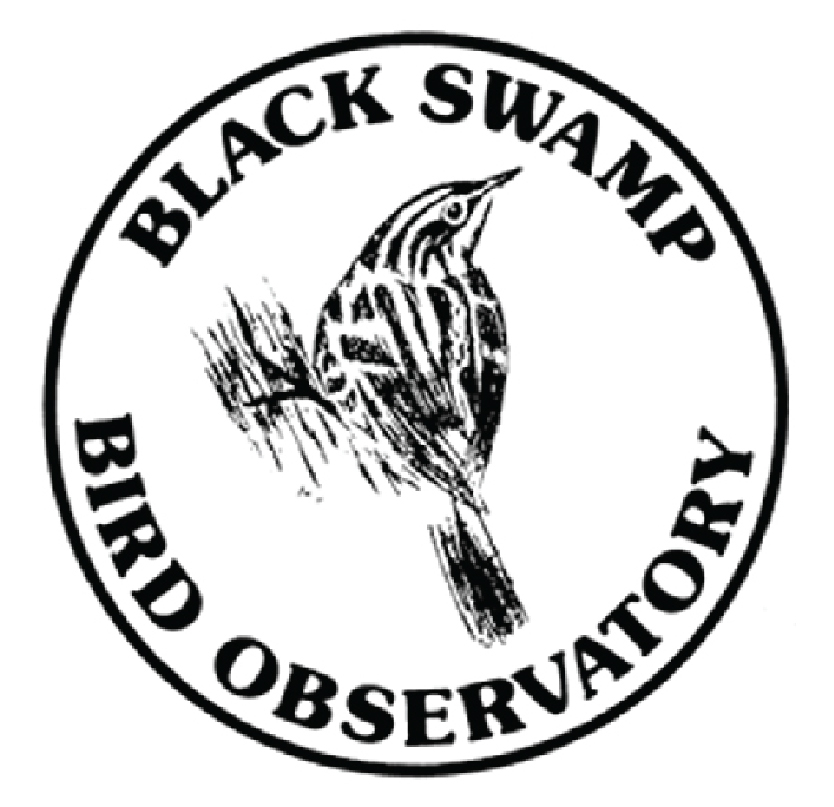 blackswamp-03.jpg