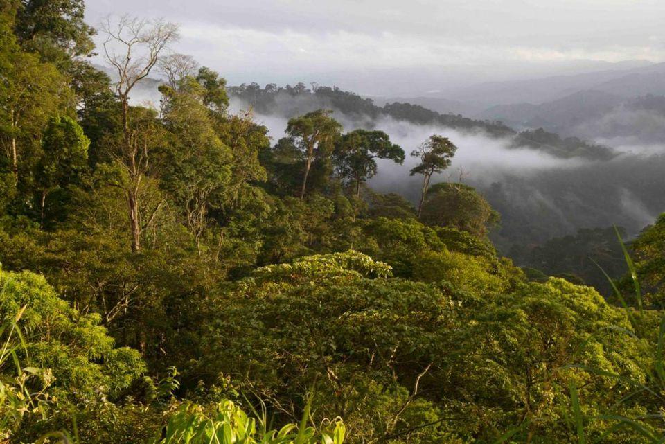 A bird-friendly certified coffee farm in San Juan del Rio Coco, Nicaragua, that supplies Birds & Beans. Photo by Scott Weidensaul.