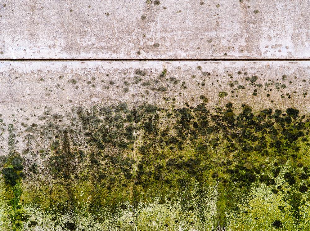 Mould Toxicity Blog.jpg