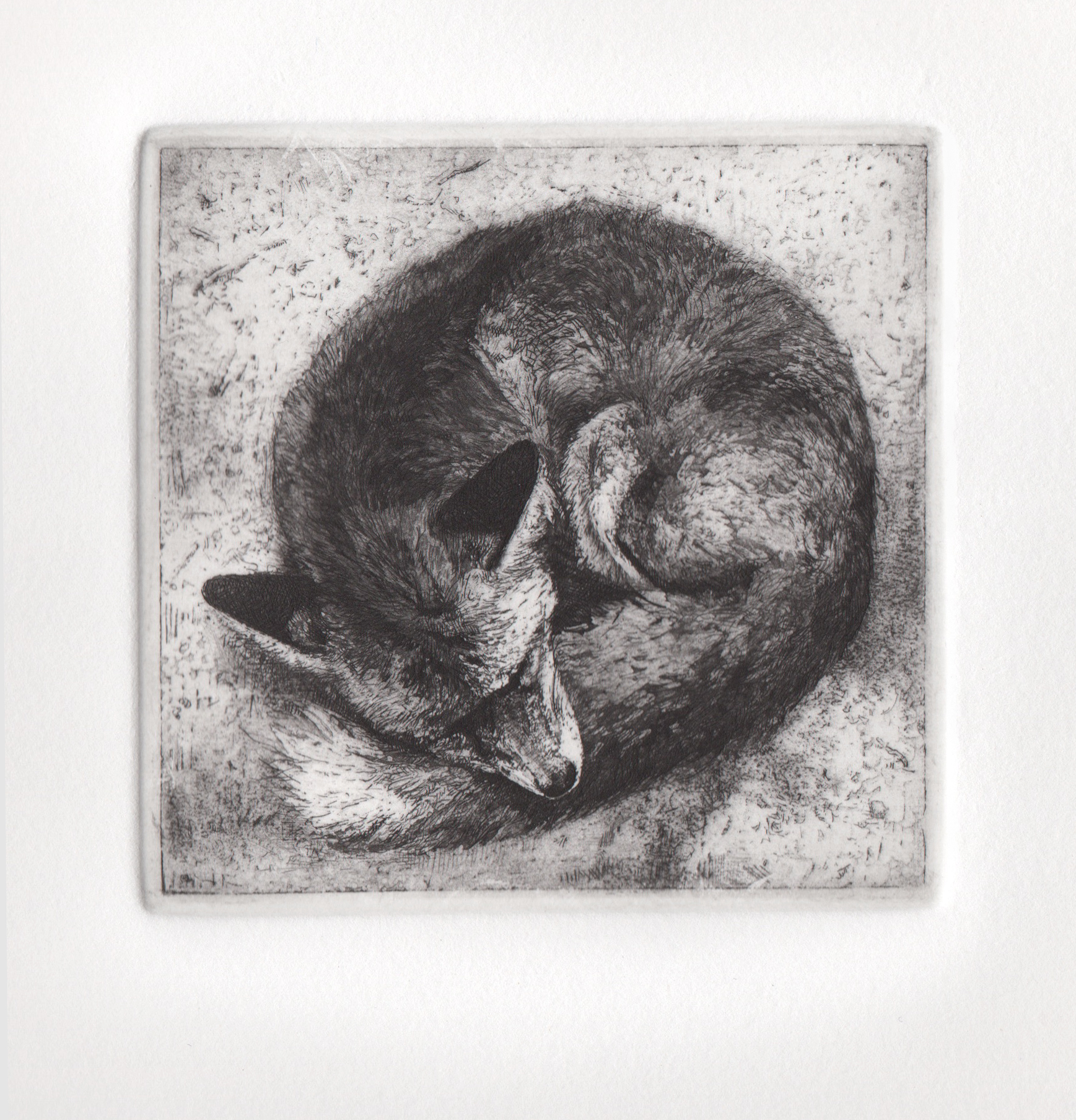 Red Fox , 2014. Etching, aquatint, and drypoint on copper.4 x 4 inches. Edition of 30.  Prints available