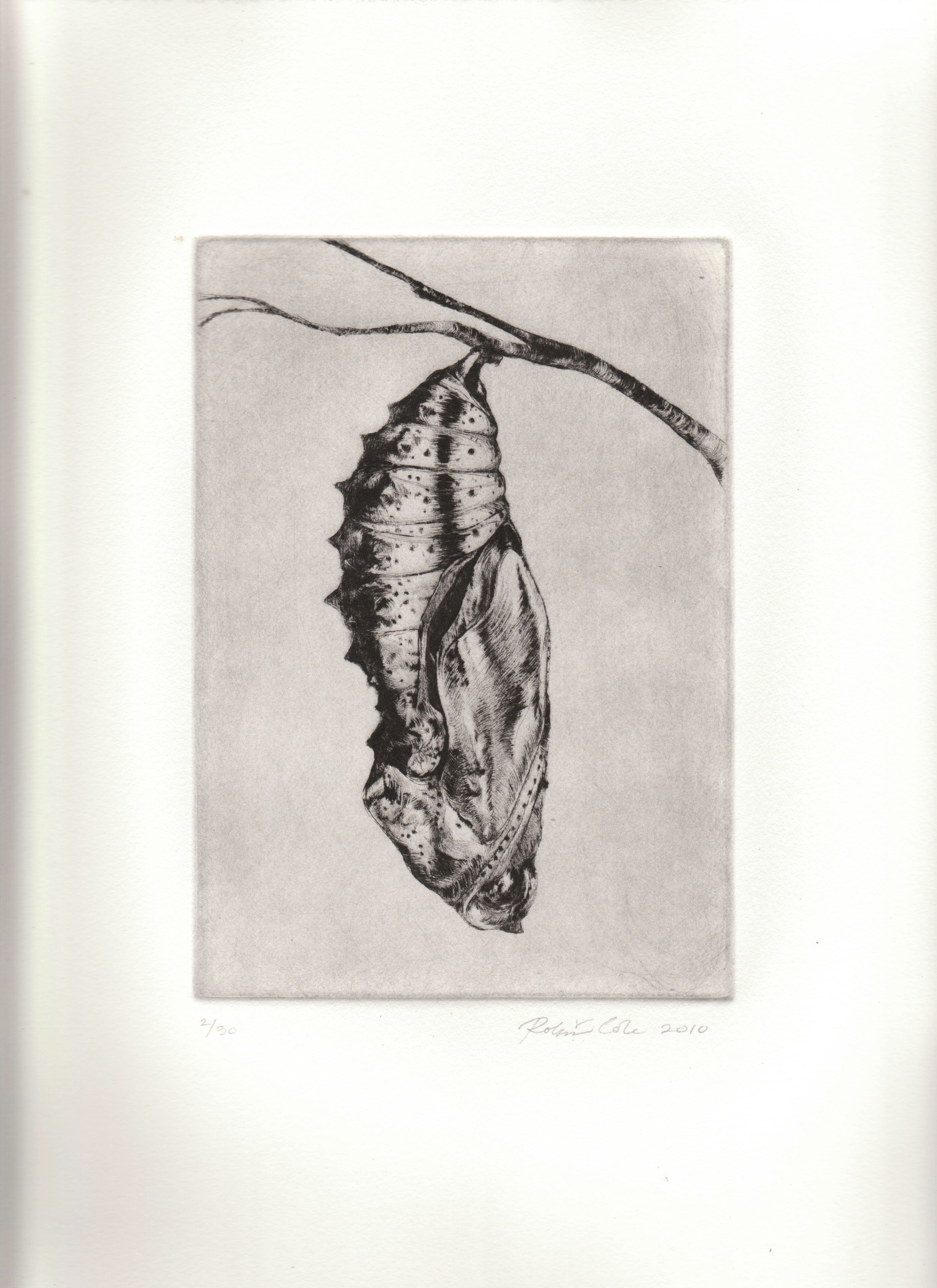 Metamorphosis I , 2010. Drypoint on copper.12 x 9 inches. Edition of 30.  Prints available.