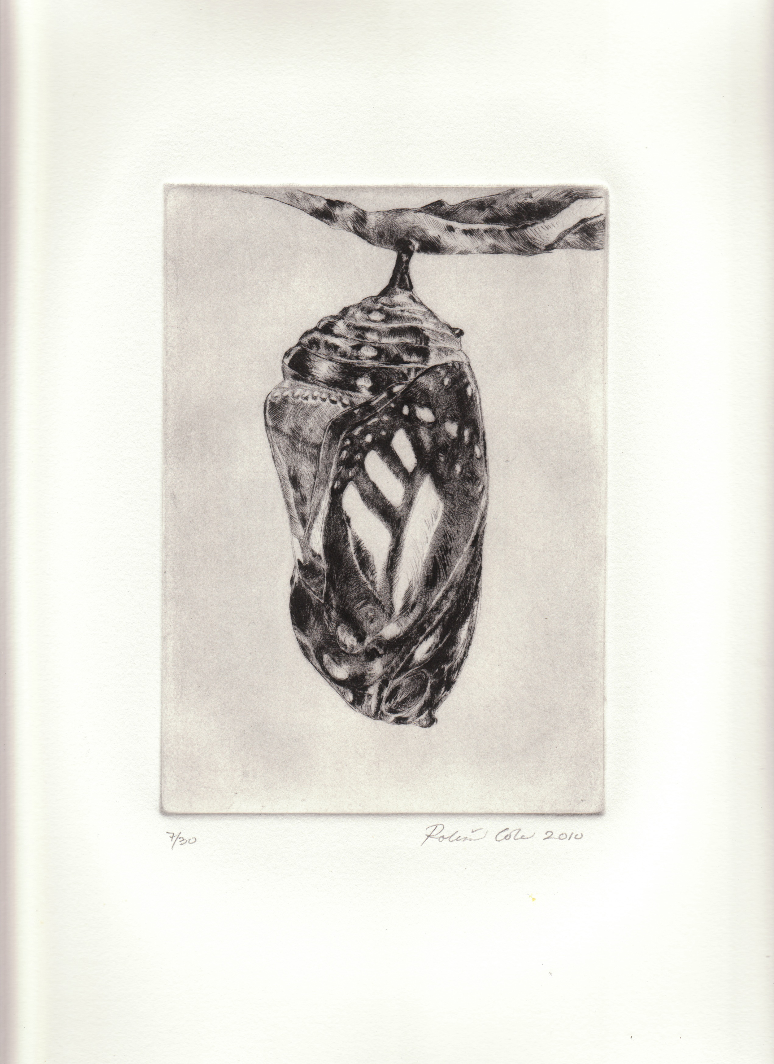 Metamorphosis II , 2010. Drypoint on copper.12 x 9 inches. Edition of 30.  Prints available.