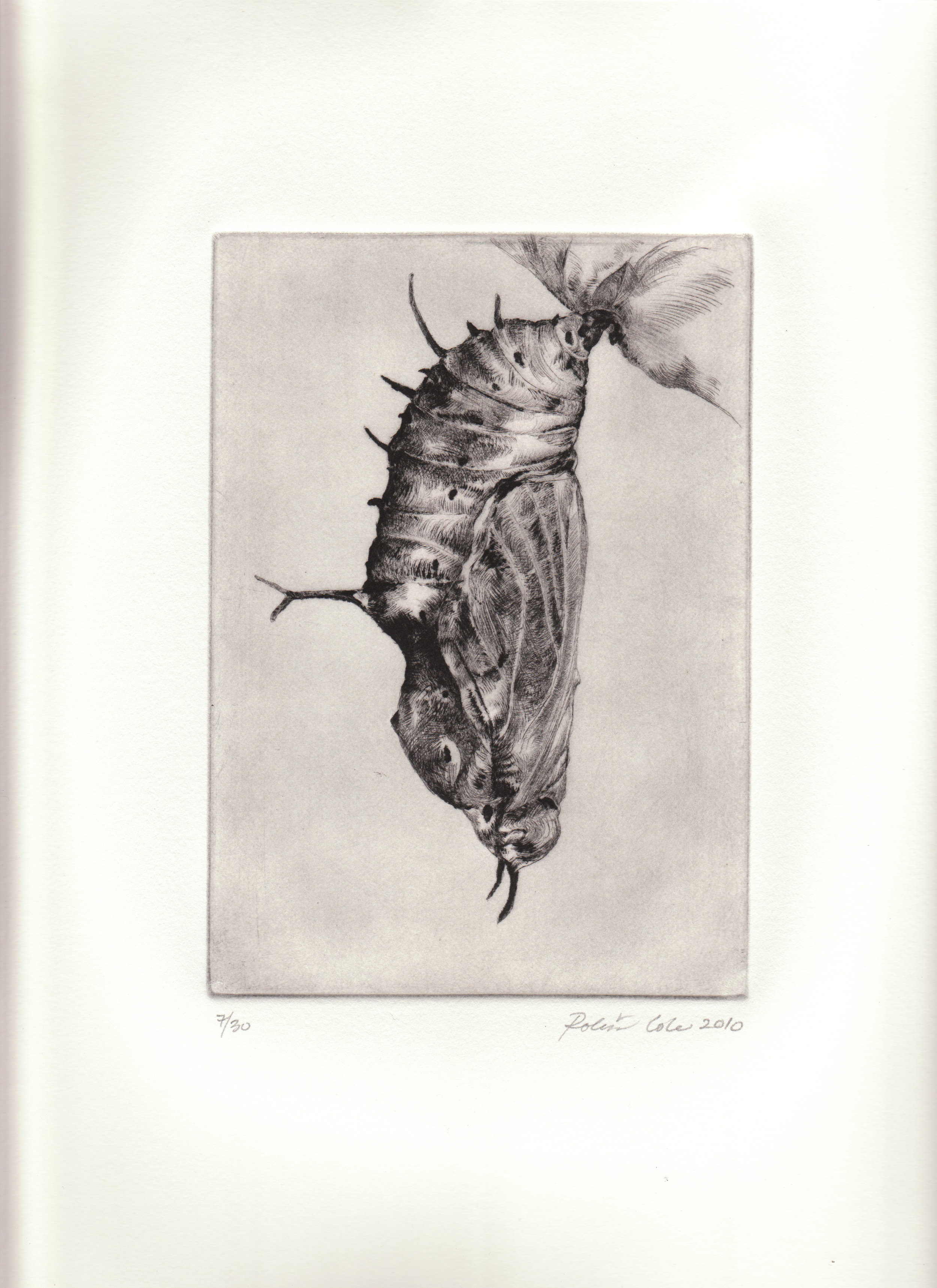 Metamorphosis III , 2010. Drypoint on copper.12 x 9 inches. Edition of 30.  Prints available.