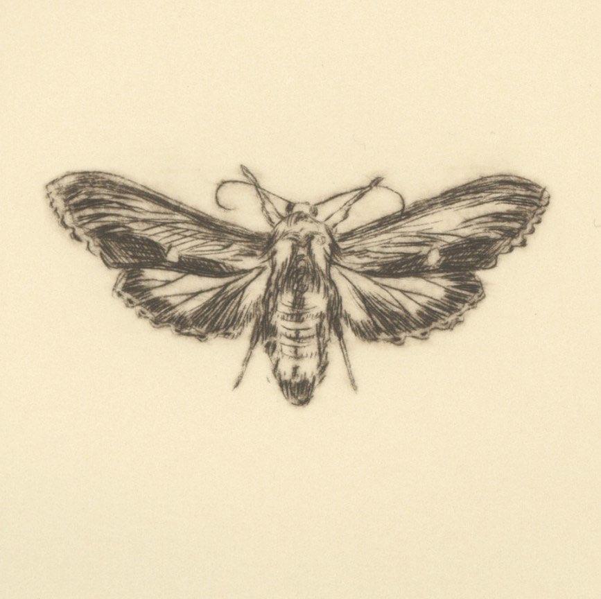 Genus folio (detail)