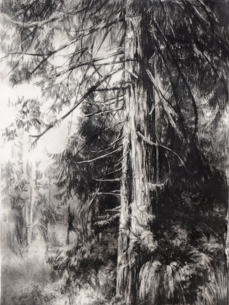 Hypatia's Woods I , 2011. Encaustic and charcoal on board.16 x 12 inches.  Available