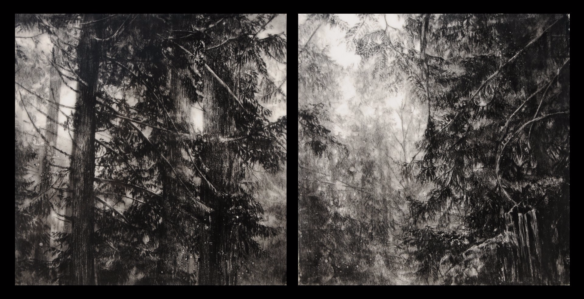 Hypatia's Woods II , 2011. Encaustic and charcoal on board. Diptych: two 10 x 10 inch panels. Private collection.