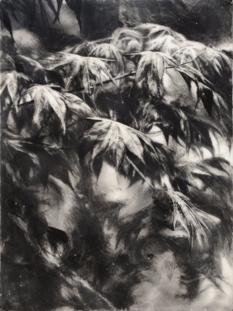 Last Light , 2011. Charcoal and encaustic on board.16 x 12 inches. Private collection.