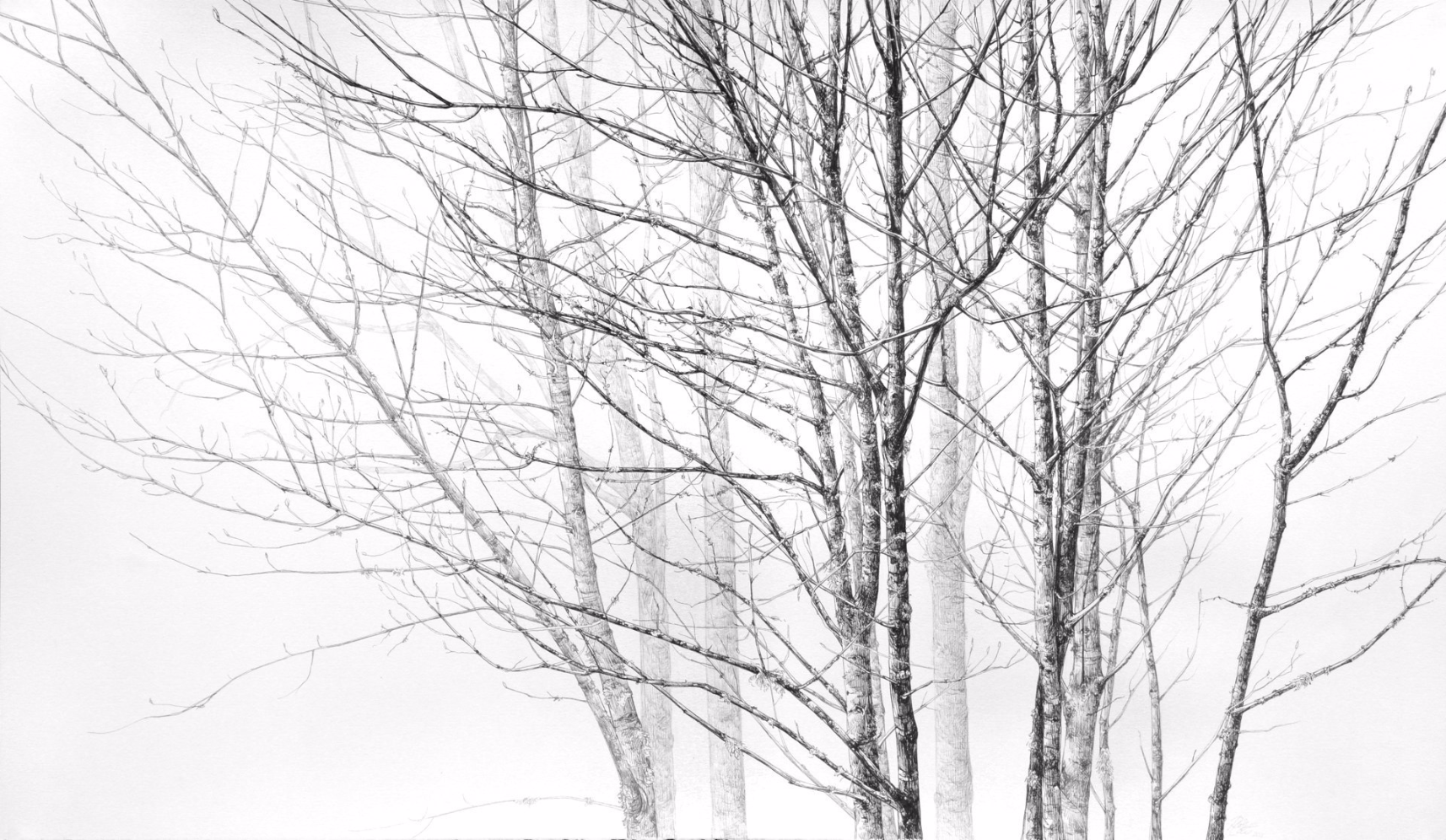 Standing Still , 2011. Ink on paper.15 x 23.5 inches. Private collection.