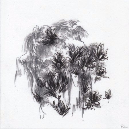 Observations II ,2010. Ink and charcoal on mylar.5 x 5 inches. Private collection.