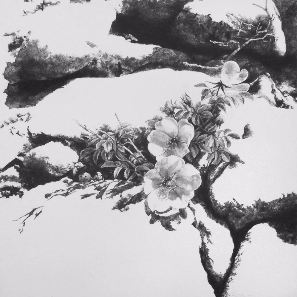 The Fertile Rock II , 2011. Graphite on clayboard.12 x 12 inches. Private collection.