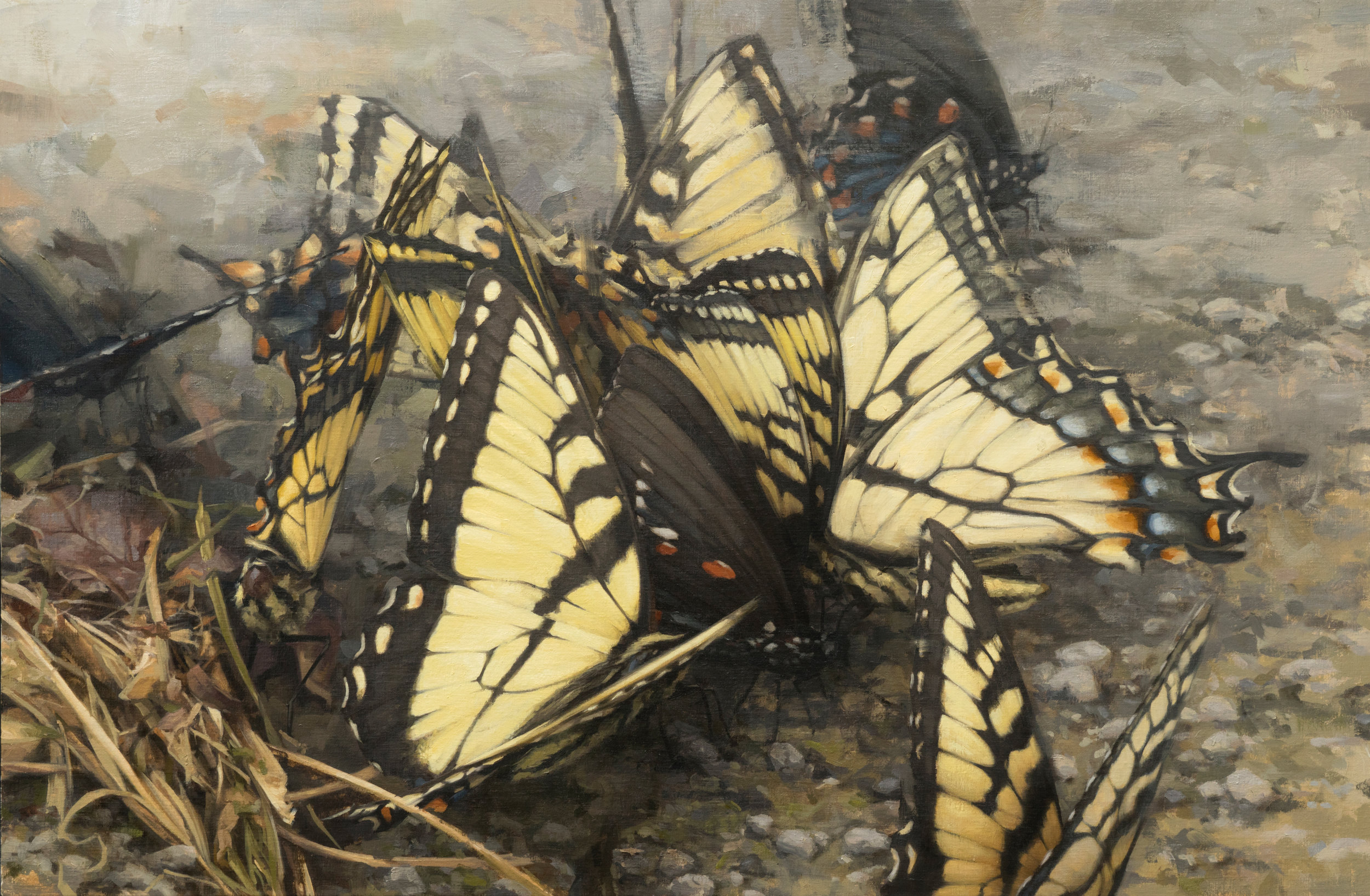 Swallowtails.jpg