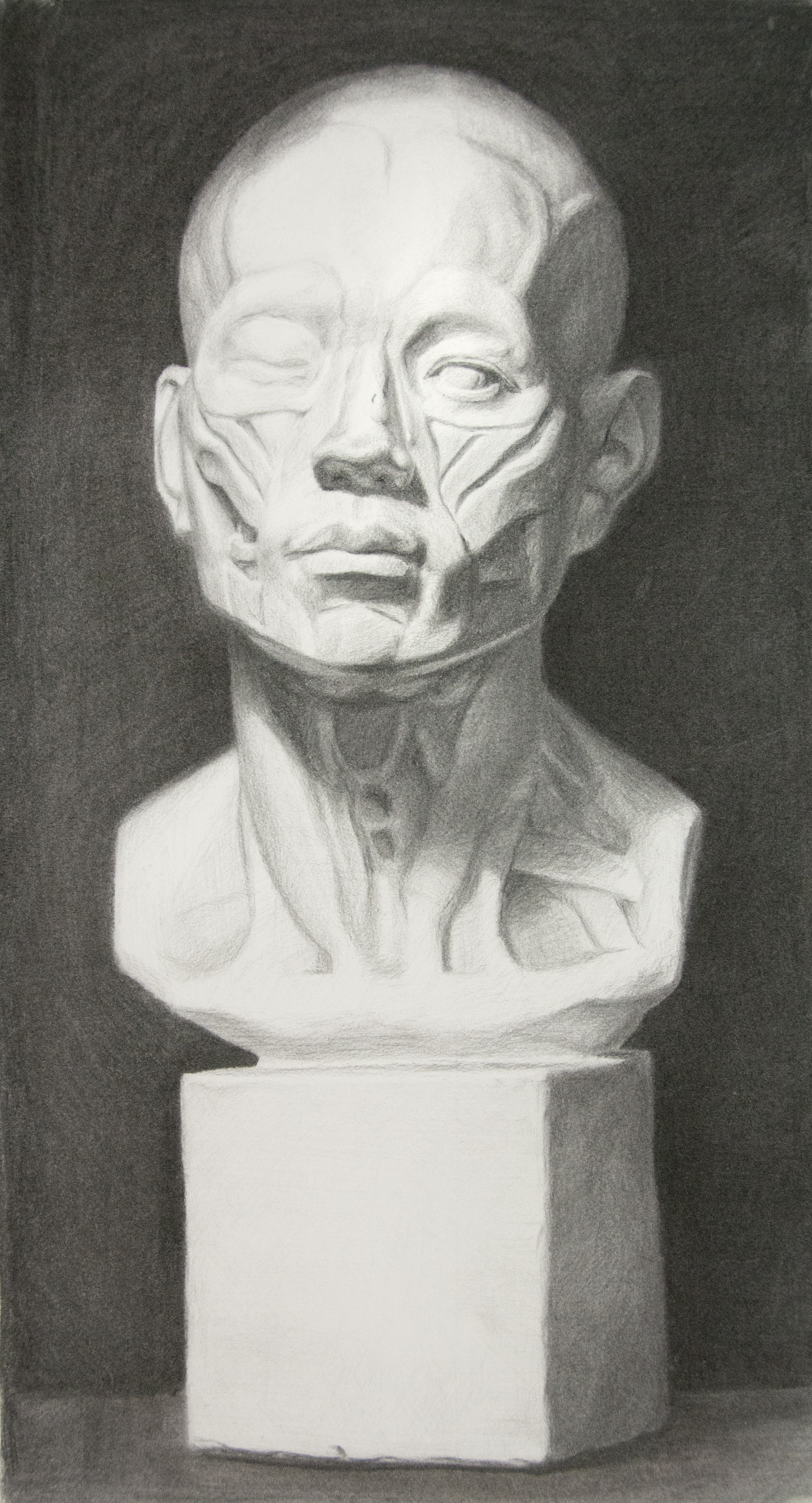 Andrew Cortez, cast drawing student.