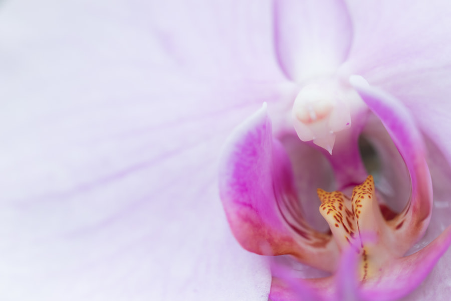 Fine Art Orchid #4