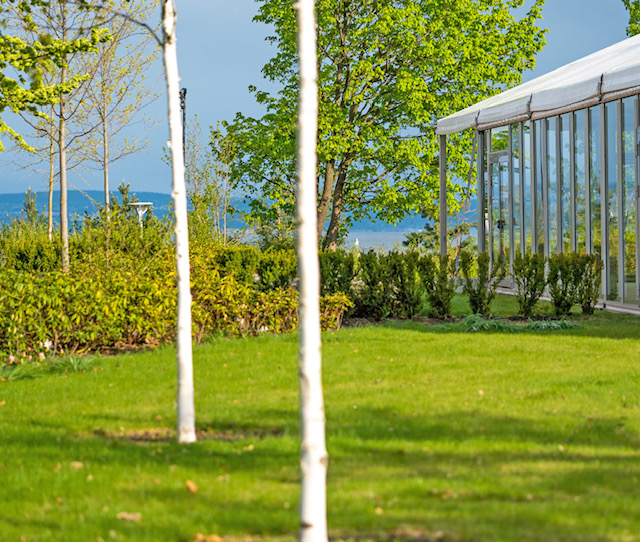 Chitra Summer garden.jpg