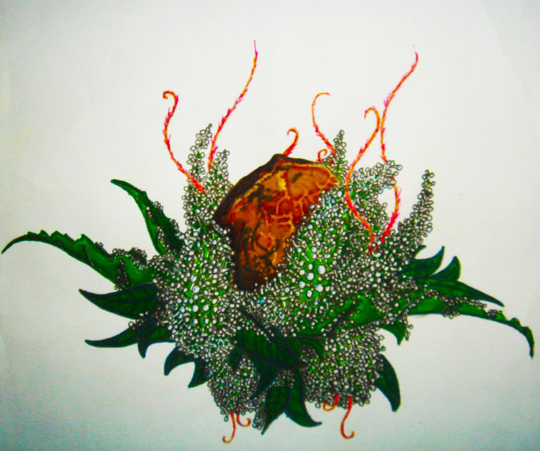 weed 1.jpg