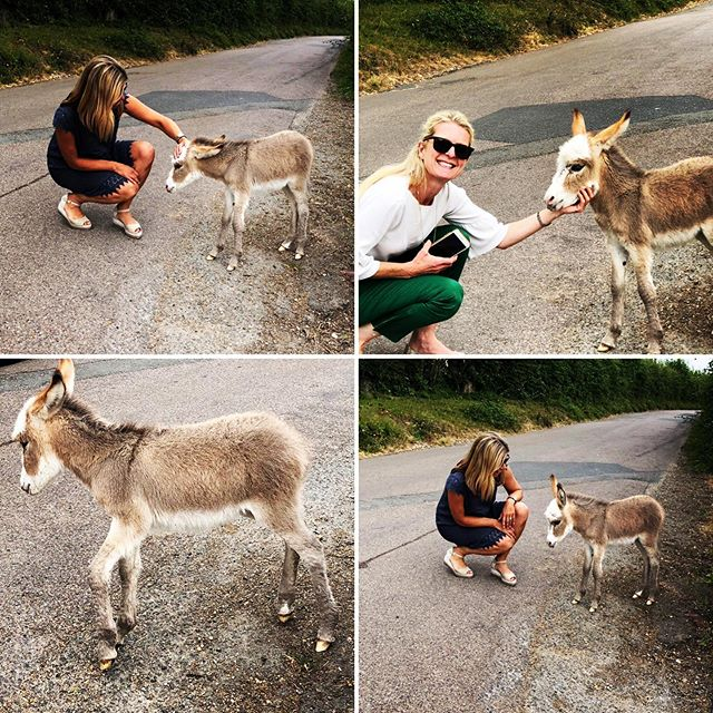 Had to stop to say hello to this tiny foal on our way to a client meeting today.  So sweet!! #newforest #donkeys #hampshireinteriordesign #maasandimpett #clientmeetingtoday #projectalmostfinished