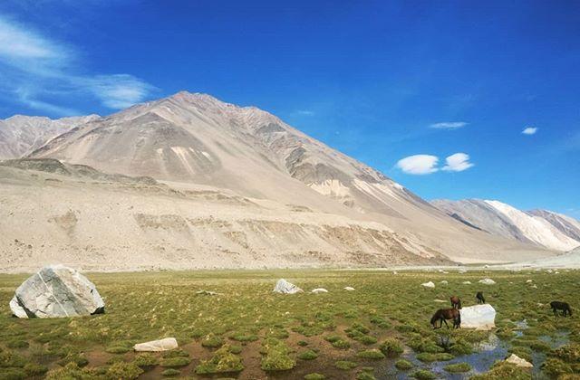 🔀🚃🔀🗻🔀🐎🔀📷🔀 where the wild things are 🔀🗻🔀🙏 ... #Ladakh #India #indiaclicks #everydayindia #lonelyplanet #lonelyplanetindia #travel #travelphotography #instatravel #travelgram #travelbug #instapassport #yourshotphotographer #yourshotindia #natgeo #nationalgeographic #natgeoadventure #globewanderer #roamtheplanet #visualsoflife #igshotz #picoftheday #photooftheday #photosociety #visualyatra #mypixeldiary #earthpix #ourplanetdaily #agameoftones #fantastic_earth