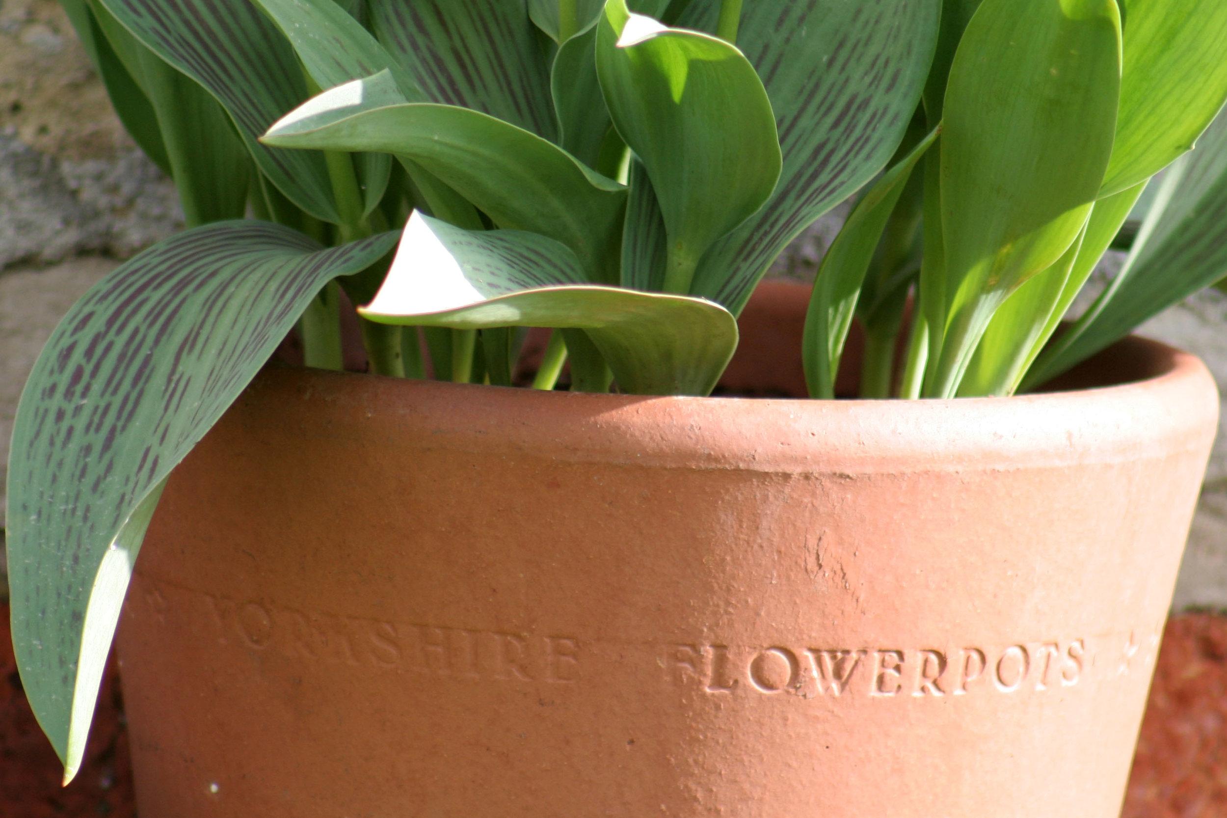 Pot at Easton Walled Gardens