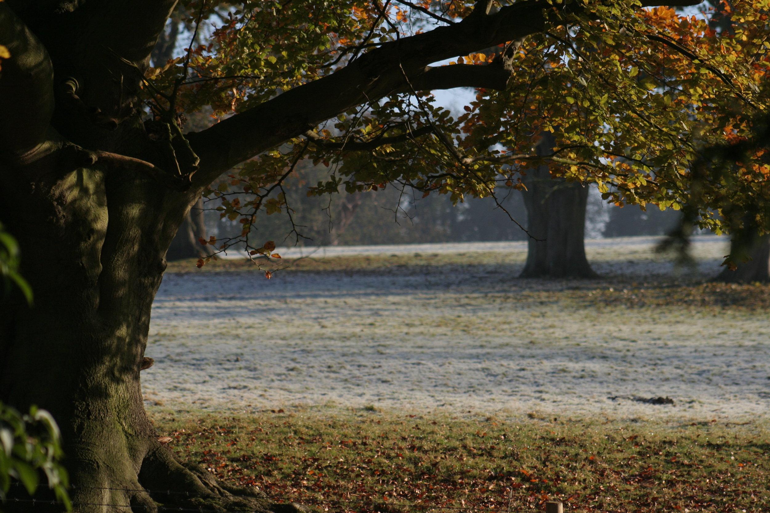 Autumn in Easton Park