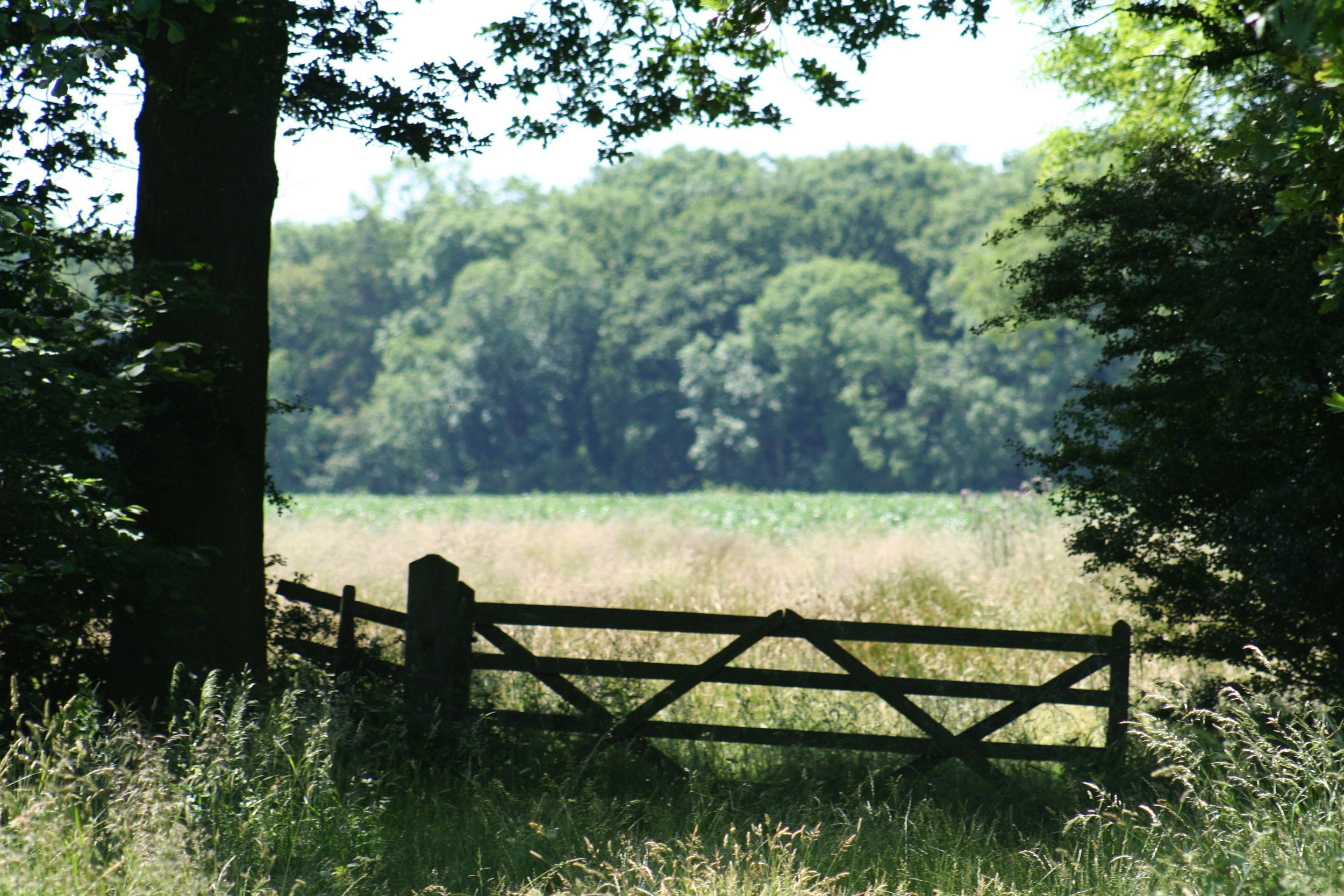 Gate at Sleight's Wood