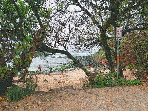 turtle-beach.jpg