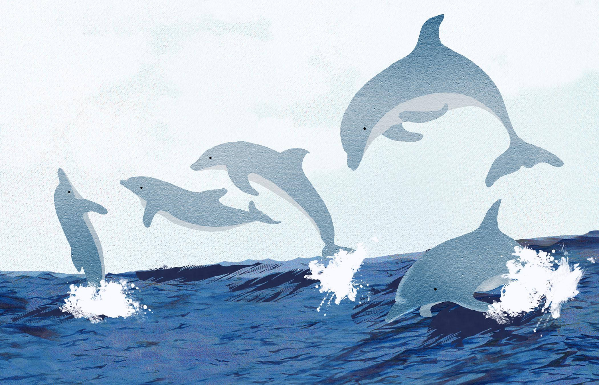Sarah Snow dolphins.jpg