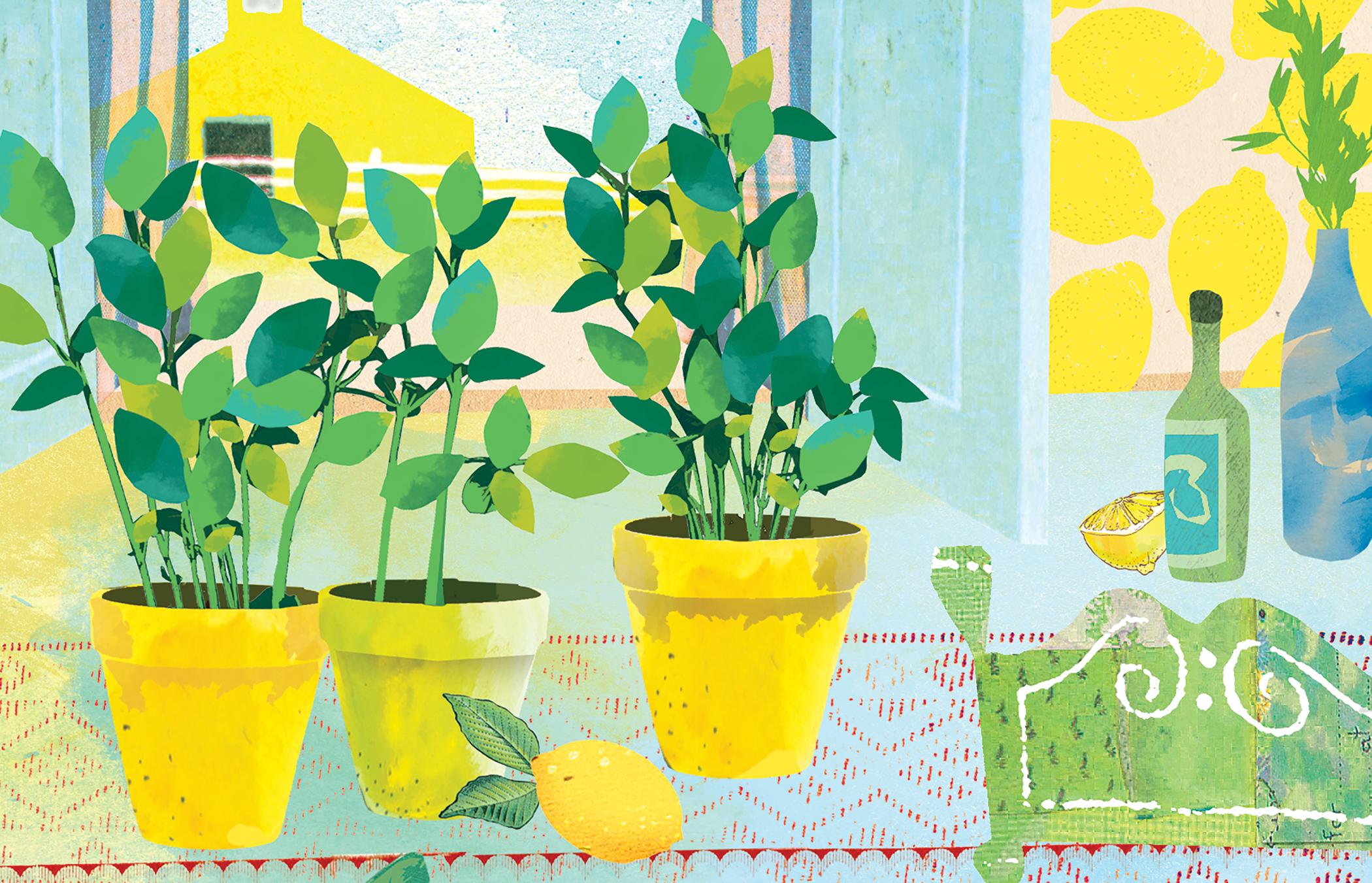 Sarah Snow lemon basil.jpg