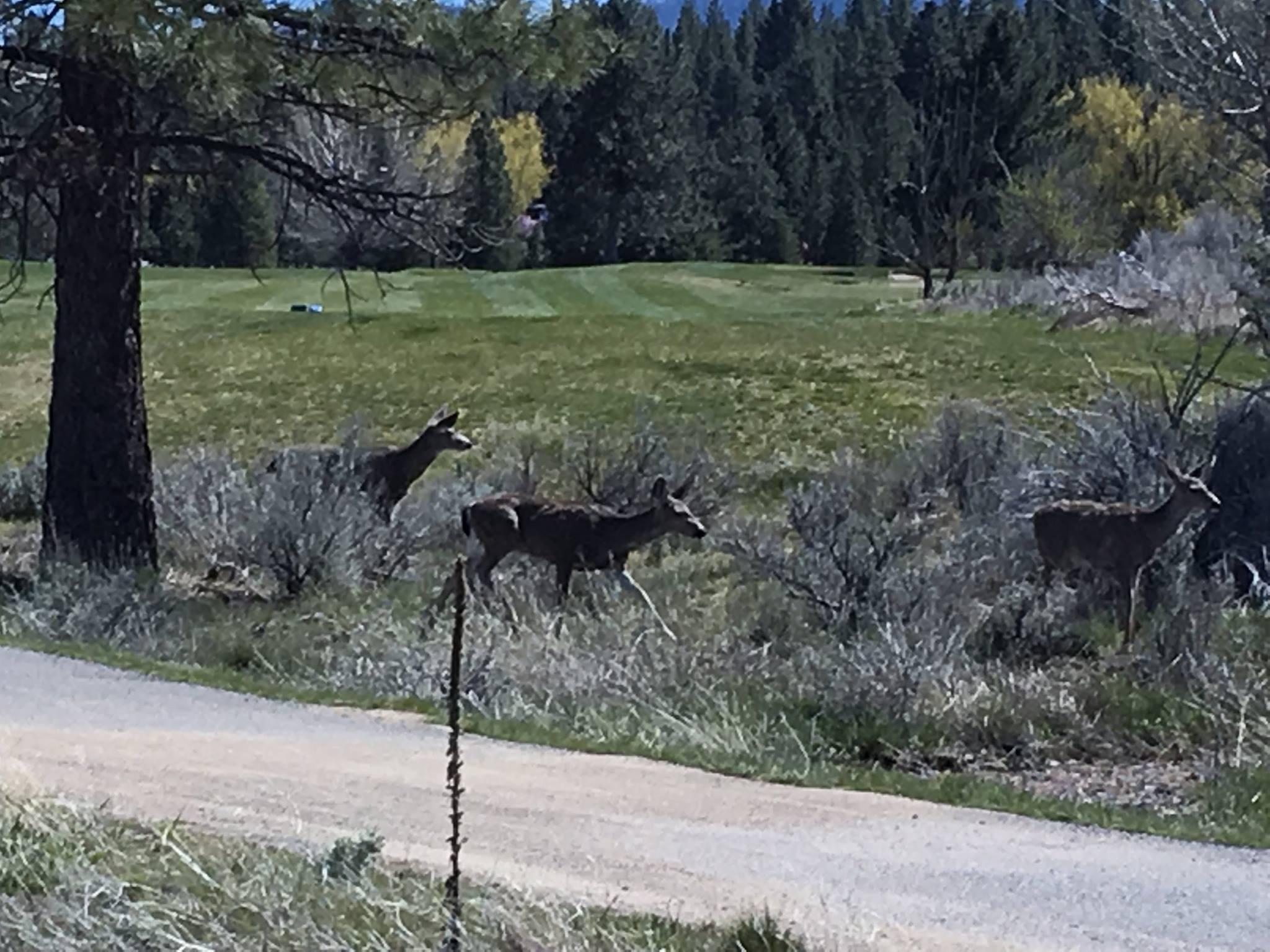 Deer hazard.jpg