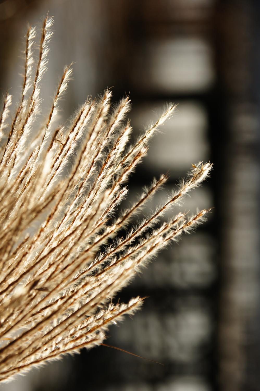 """River Grasses"""