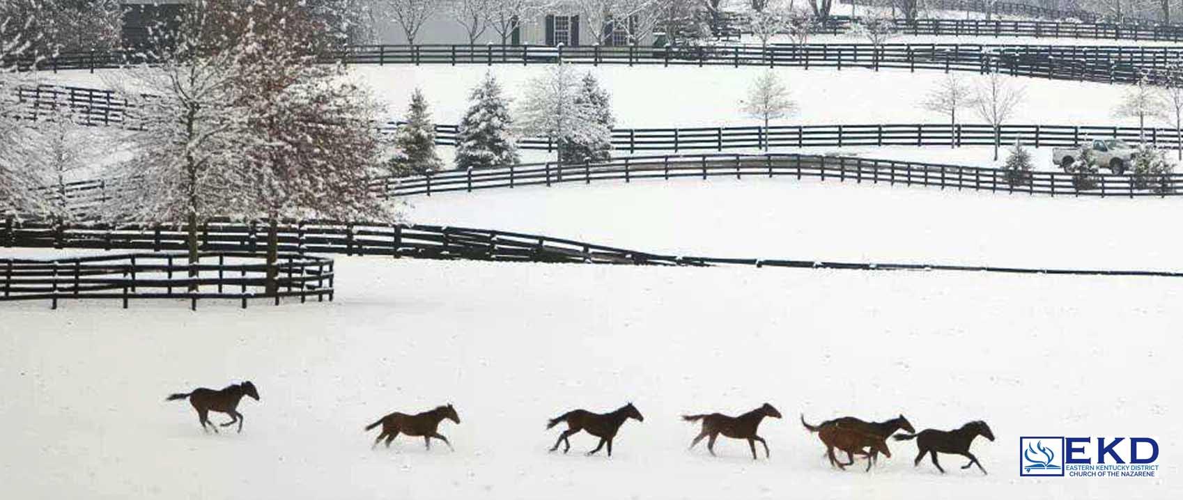 Kentucky Winter.jpg