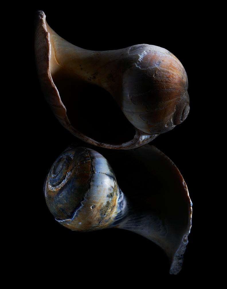 005-Shells01-06-09-002942.jpg