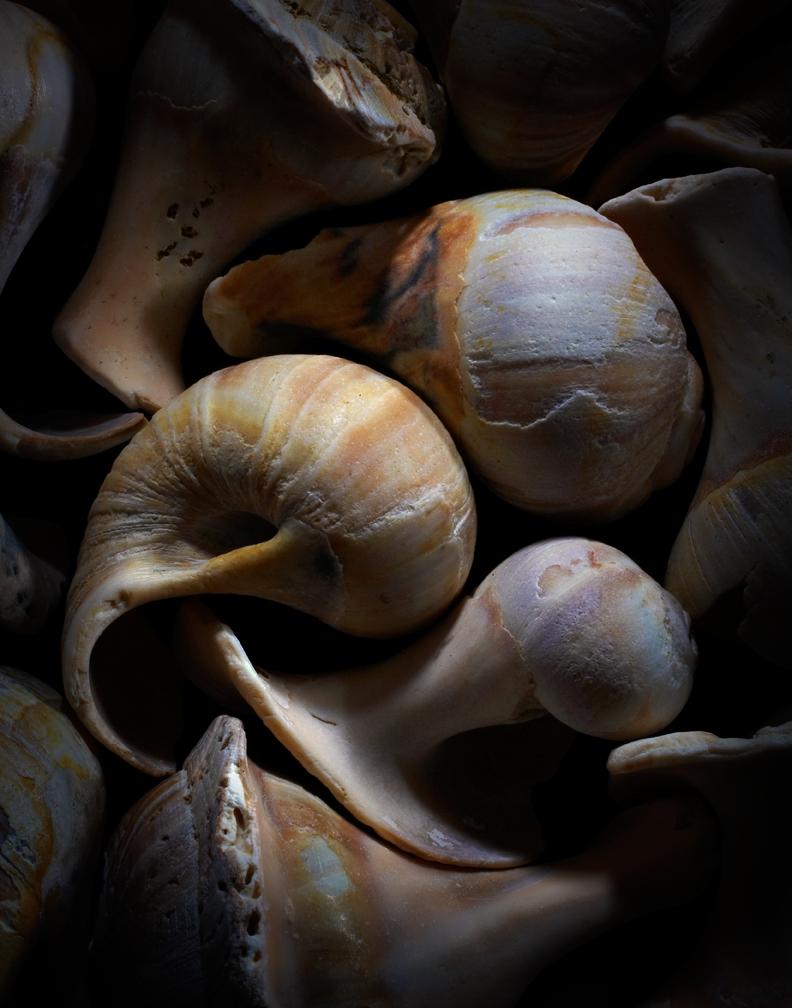Shells01-06-09-002450.jpg
