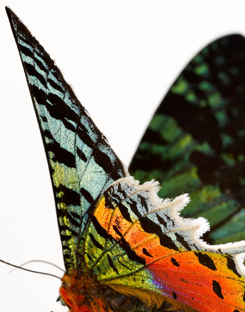 Butterflies 10-10 0152.jpg
