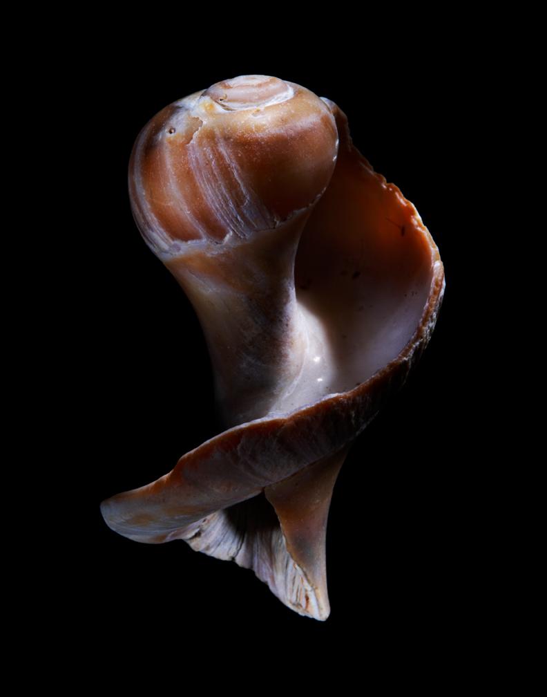 Shells10-22-08-001246.jpg