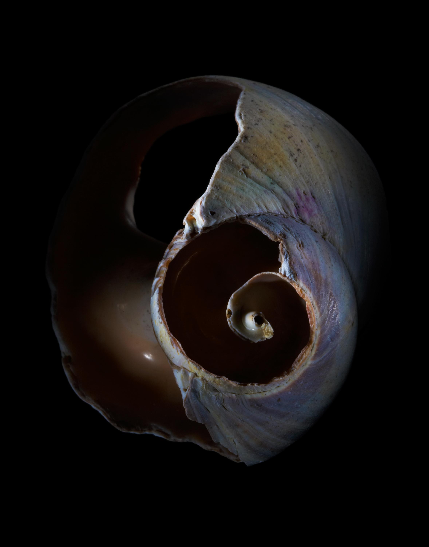 Shells01-06-09-002711.jpg