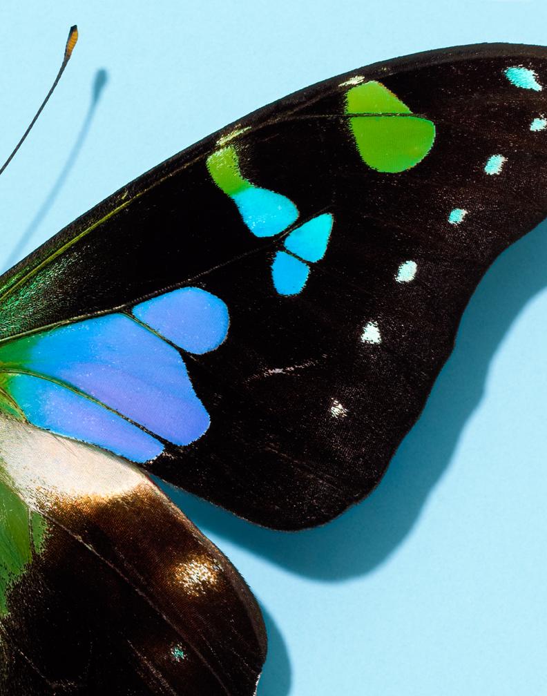 Butterflies 3-22-11 1770.jpg