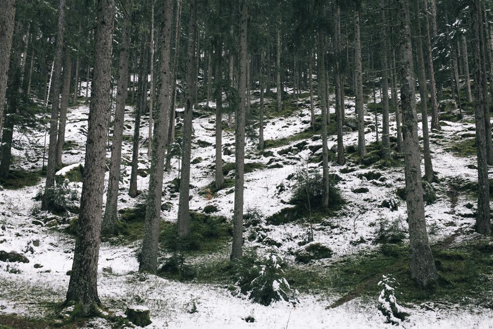 première neige d'automne en fôret, chamonix (haute-savoie, france). Page 20