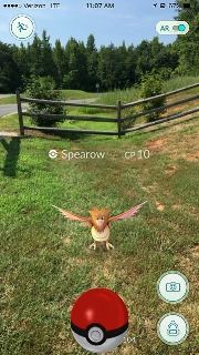 A Spearow at the entrance to Powhatan State Park in Virginia. Credit: Virginia State Parks on Flickr.